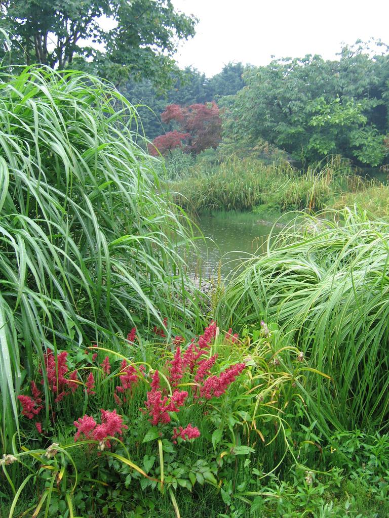 Jardin japonais du havre vue du plan d eau le havre - Jardin japonais le havre ...