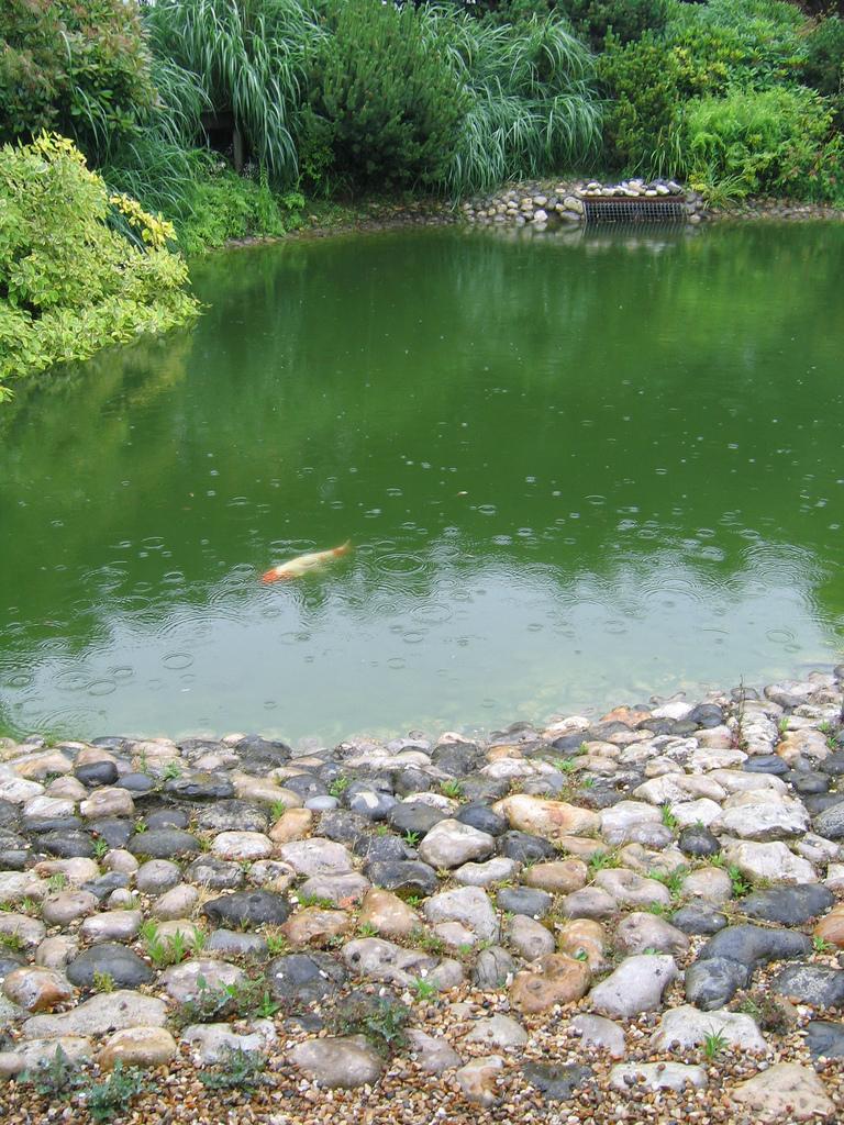 Jardin japonais du havre galets et plan d eau le havre - Jardin japonais le havre ...
